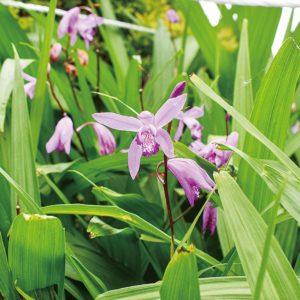 初夏に咲く花々 県立相模三川公園(海老名市)6月1日から遊具・駐車場もオープン