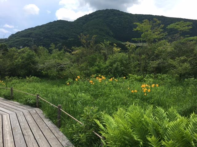 〈5月27日より通常開園〉『箱根湿生花園』新緑の季節に湿原の花々を愛でながら木道散策!