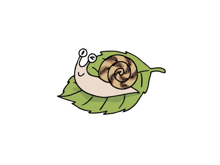 「カエルとカタツムリ展〜梅雨の自然観察〜」飼育展示のほか写真パネルで【箱根町】