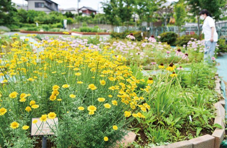 西洋や日本のハーブ約60種類が6月下旬まで見頃@ 藤沢市長久保公園