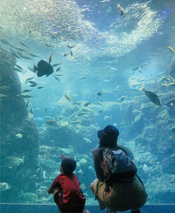 《 新江ノ島水族館》5/31に営業再開「イルカとアシカのミニライブ」を実施