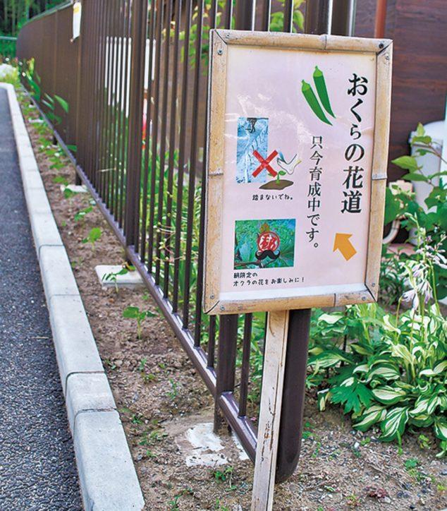 どんな花が咲く?『おくらの花道』育成中@泉区岡津町ふれあい公園
