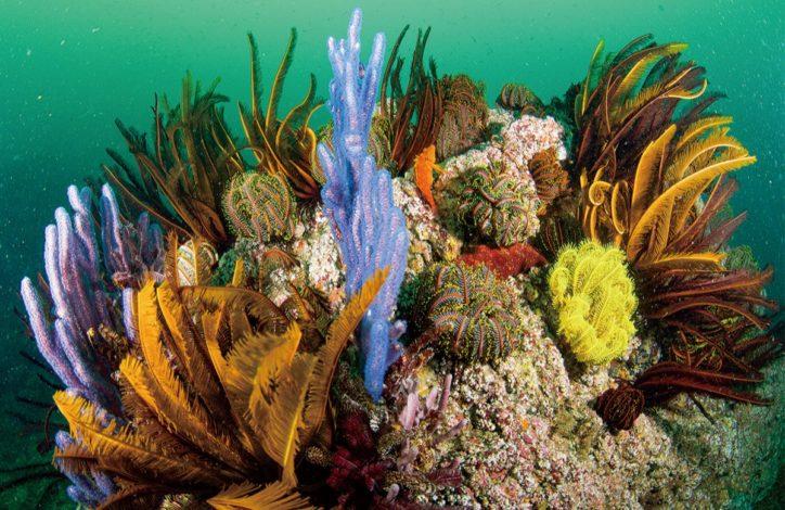 色とりどりのサンゴの写真展「海中」逗子アートギャラリー・逗子文化プラザの2カ所で開催
