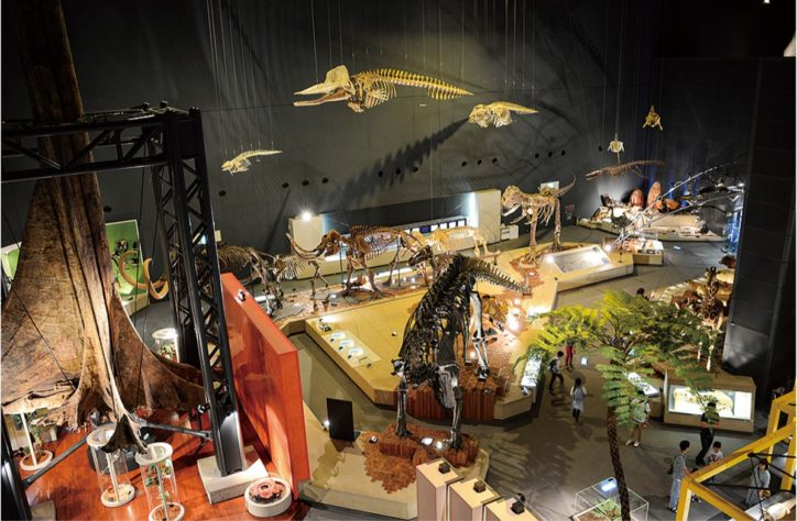 <7月1日再開>小田原 「生命の星・地球博物館」展示は動画で公開中!