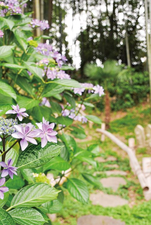 散策路彩るアジサイ@横須賀市・カスヤの森現代美術館<6月4日から再開>