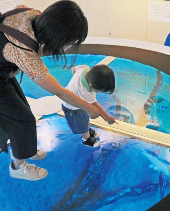 相模川ふれあい科学館で魚を上から見てみよう【相模原市中央区水郷田名】
