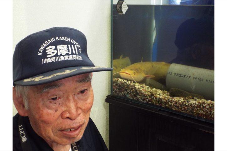 「白の大ナマズ」を展示 川崎漁協 二ヶ領せせらぎ館へ寄贈