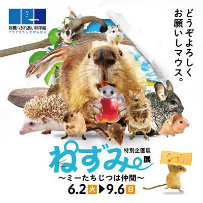 6月2日再開!相模川ふれあい科学館で「ねずみ展 ~ミーたちじつは仲間~」展