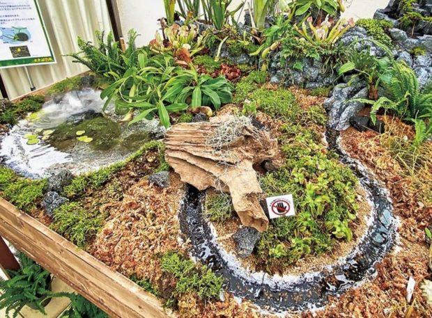 《独特な魅力の食虫植物展 》県立大船フラワーセンターで展示・販売