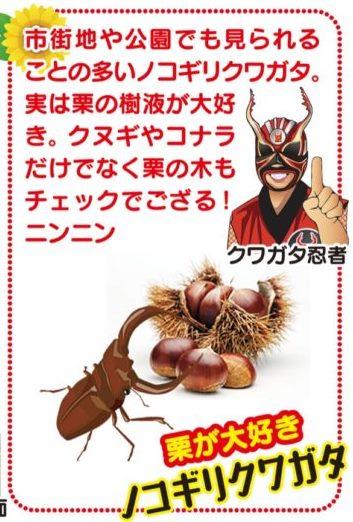 ミヤマ☆仮面とクワガタ忍者が伝授 「クワ採集は早起きが一番」夏を楽しもう