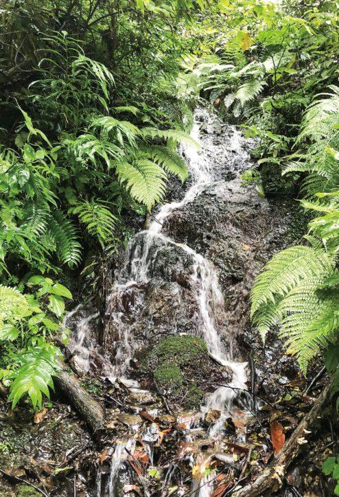 社殿の裏、静かに流れる「関根御滝」【横須賀市秋谷】