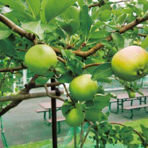 ニュートンのリンゴをプレゼント @神奈川工科大学