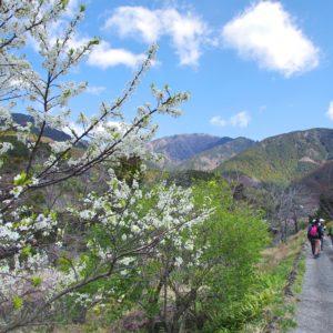 自然/歴史/文化に触れる「蓑毛里山ウォーク」(2時間25分):秦野丹沢ハイキングスタンプラリー