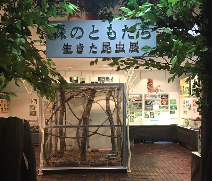 箱根町立森のふれあい館で「生きた昆虫展」子どもたちに大人気のカブト、クワガタも!
