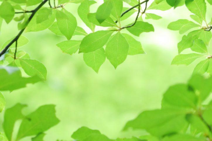 参加者募集「涼をもとめて二つの市民の森〜濃い緑の森に涼をもとめて〜」瀬谷水緑の健康ウオーク