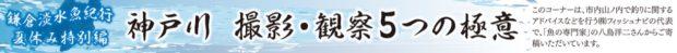 鎌倉淡水魚紀行  神戸川(ごうどがわ)あなたにもできる『 撮影 ・観察5つの極意』