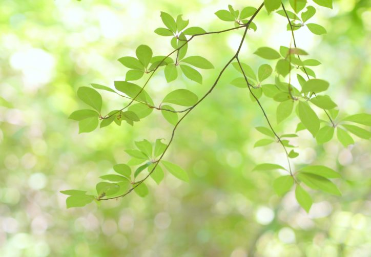 【無料・要事前申込】瀬谷市民の森「和泉川源流の生物観察」@瀬谷環境ネット