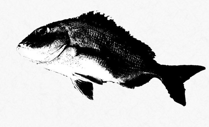<入場無料>「魚拓展」アートガーデンかわさきで【2020年9月20日まで】