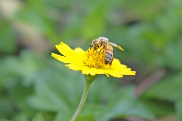 小田原フラワーガーデンで『みつばちのヒミツ展』開催中!貴重な養蜂日誌を初公開!