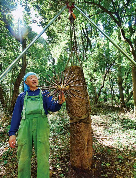 横浜動物の森公園内で「GROUP創造と森の声」樹木の美術展