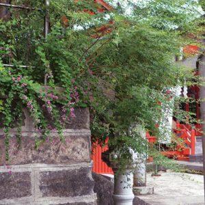 「秋の七草寺社めぐり」秋風にハギ揺れる3番札所・萩の宮【三崎・海南神社】