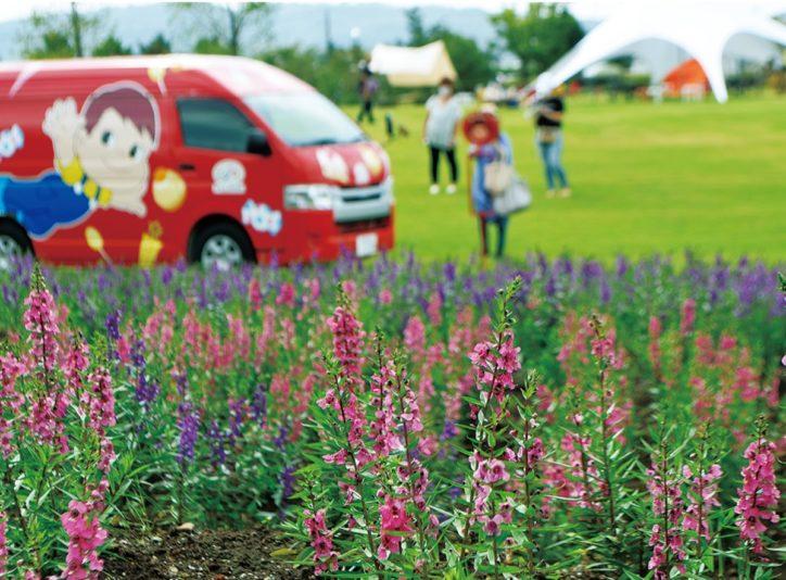 やさしい彩りの熱帯植物「アンゲロニア」見頃 10月中旬まで@平塚・花菜ガーデン