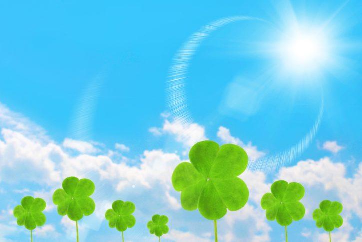 特別な日を緑で祝福、家族のお祝いに記念樹を贈呈【秦野市民限定・要事前申込】