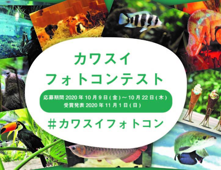 【10月22日まで】SNSに投稿して応募しよう「カワスイフォトコンテスト」カメラセミナーも@川崎水族館