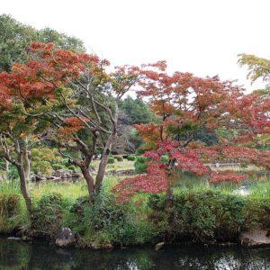 秋を見つけに行きませんか!@旭区こども自然公園
