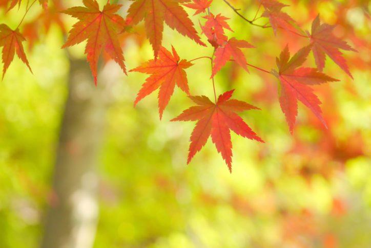 【事前申込不要】ウオーキングイベント「くさぶえのみち・緑の回廊〜深まる秋の気配を感じて〜」