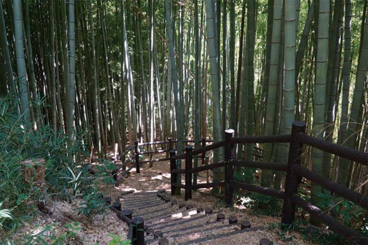 【栄の森へ行こう】本郷ふじやま公園(ほんごうふじやまこうえん) 面積:約9ha