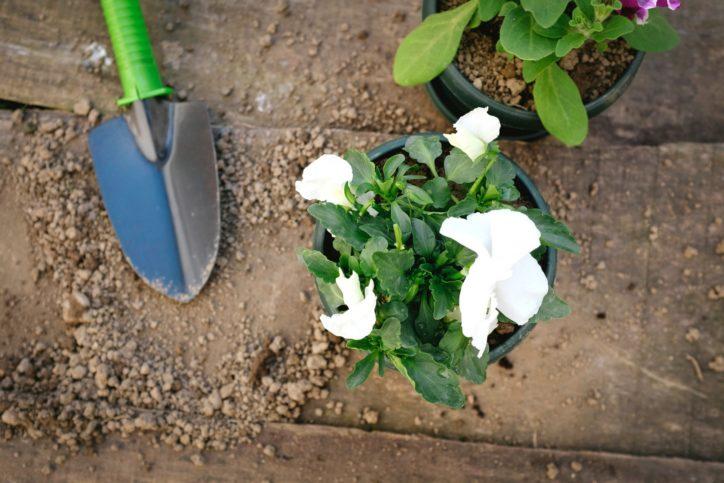 【栄区在住在勤在学者優先】季節の草花を組合せたコンテナガーデンづくり@栄区役所