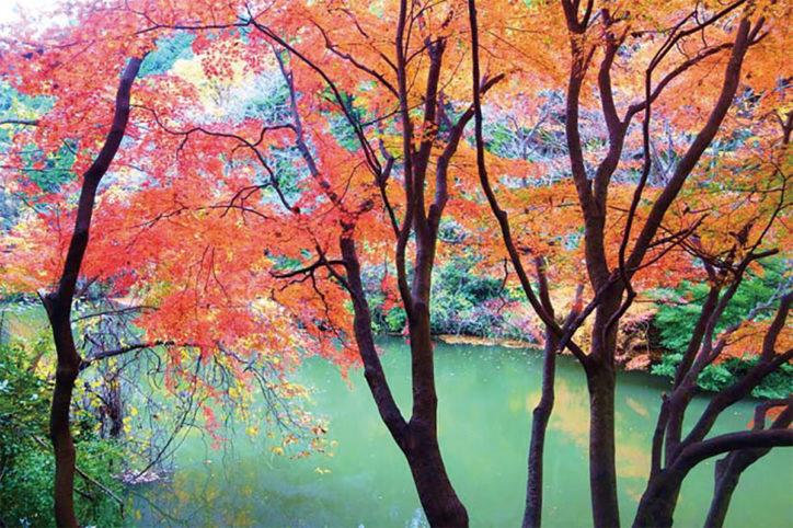 【栄の森へ行こう】瀬上市民の森 (せがみしみんのもり) 面積:約48ha