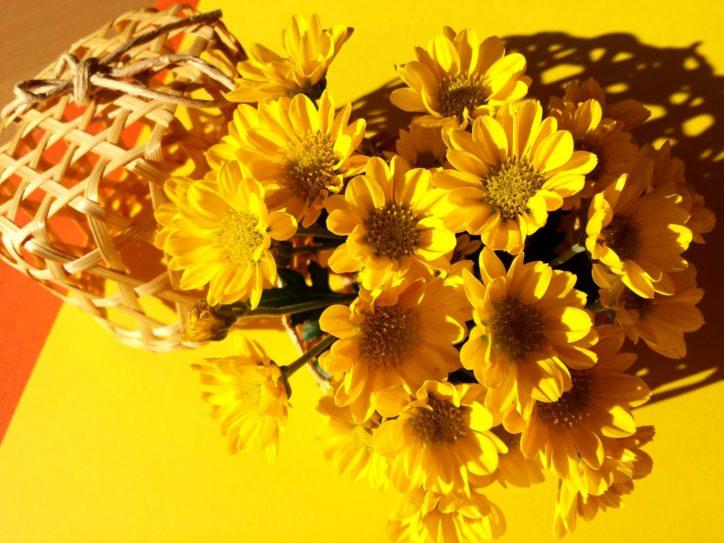 横浜市鶴見区・旧藤本家屋敷「重陽の節句」菊酒や菊の被綿で健康を祈願する行事