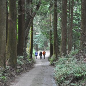 """表丹沢で""""働き女子""""が森林セラピー体験してきた!心とからだ目覚める秦野山旅へ"""