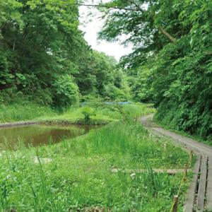 【栄の森へ行こう】荒井沢市民の森 (あらいさわしみんのもり) 面積:約10ha