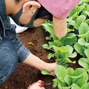 地元野菜で商品開発から販売まで「横浜スイーツ&カフェ専門学校 」JA横浜とのコラボ