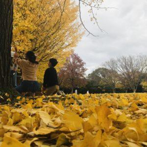 まるで黄金のじゅうたん!? 藤沢市の御殿辺公園に秋の訪れ