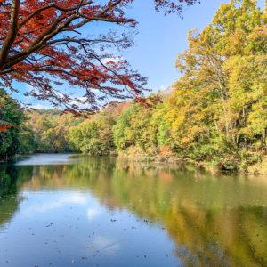 地震で誕生した堰止湖(せきとめこ)『震生湖』が国登録記念物に@秦野市・中井町