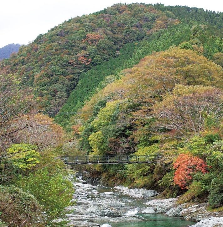 記者レポ~山の紅葉はいかほどか!@山北町中川温泉