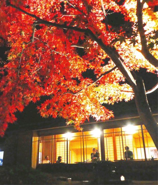 お茶室庭園で恒例の紅葉ライトアップ    @県立秦野戸川公園
