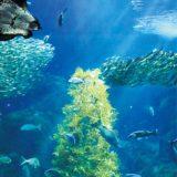 海藻で「光の宿る木」音・光・泡の演出も@新江ノ島水族館