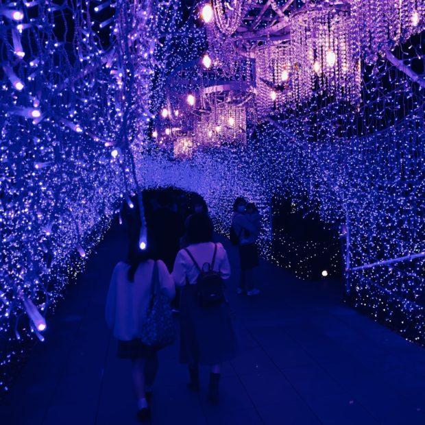 関東3大イルミネーション・全国ランキング2位! 江の島一帯が光に包まれ「湘南の宝石」に