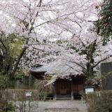 大日堂/桜と楽しむ秦野の国登録有形文化財めぐり