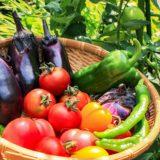 【利用者募集中】手ぶらで野菜作りができる貸し農園「旬菜みのりファーム」@綾瀬市大上
