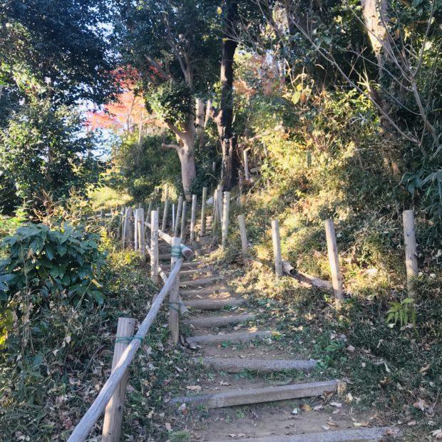 えっ!こんなところから江の島!? 伊勢山公園に行ってみよう