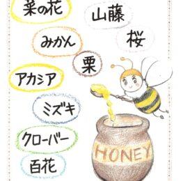 桜の花の天然はちみつ 秦野・尾尻産を使用/大津養蜂園(秦野市)