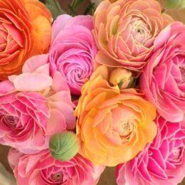 愛川園芸/季節の花からハーブまで 愛川の自然が育む緑の恵み【愛川にぎわいマルシェ参加店舗】