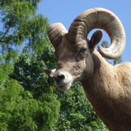 「アニマルペアレント」を募集中!金沢動物園、よこはま動物園ズーラシア、野毛山動物園を支援しませんか?