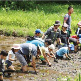 田んぼや畑で栽培・収穫を体験できる会員に、3月より募集@茅ケ崎里山公園